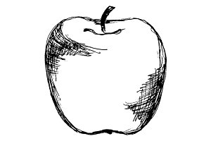 Apple fruit sketch line art vector