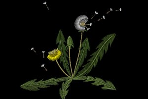 Embroidery. Dandelion
