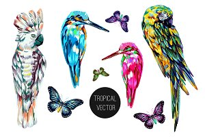 Exotic birds,parrots illustrations