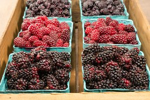 Fresh marionberries and tayberries