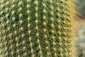 Cactus plant with sharp thorns