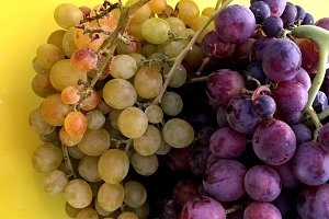 Two-colors grapes