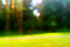 Vertical summer forest park bokeh background