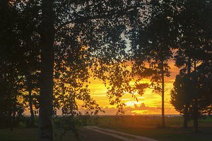 The road past the birch to the sunset