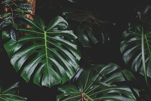 Dark Tropical Leaves