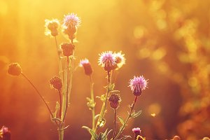 pink meadow wild flowers