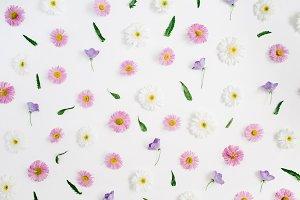 Chamomile and daisy pattern