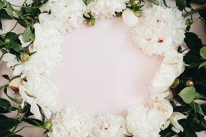 White peonies on pink background