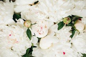 Closeup of white peonies