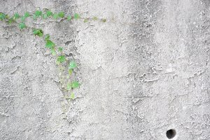 Concrete Wall with Ivy and Pipe Hole
