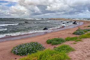 Flowers on a sandy beach in a storm