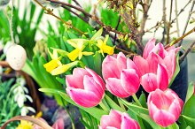 Easter decoration with spring flower