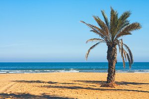 Mediterranean with palm tree