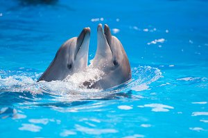 Dolphins dancing in water