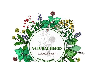 Hand drawn herbs and leaves label