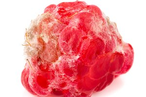 Raspberry spoiled isolated on white background macro