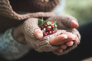 Hand in mittens holds cowberries berries