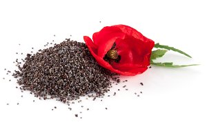 Poppy seeds with flower isolated on white background