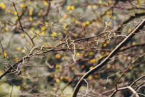 Branches #2