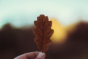 Leaf & Bookeh