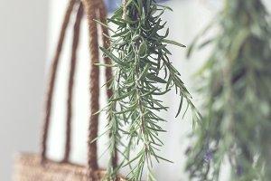 Drying Herbs - Rosemary