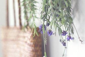 Lavender herbs hanging