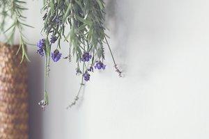 Lavender Hanging