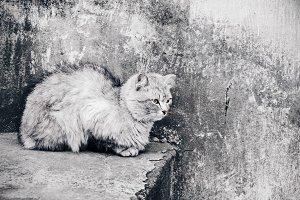 grey cat chameleon