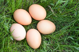 chicken eggs lying in a nest of green grass