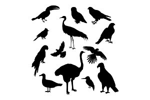 Set of Birds Silhouettes Vector Illustration