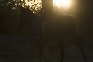 Jockey - silhouette of a woman riding a horse - sunset or sunrise