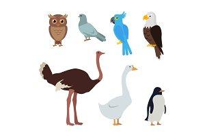 Owl Dove Blue Parrot Eagle Ostrich Goose Penguin