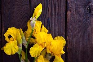 Bouquet of yellow iris