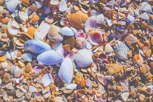 Seashels on sandy beach. Sea summer vacation background