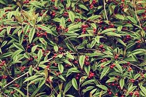 Autumn berries texture