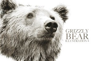 Grizzly Bear Illustration IV