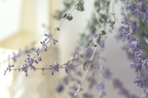 Russian Sage floral image
