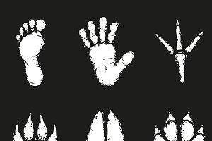 Human and animal footprint