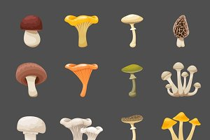 Vector mushrooms illustration