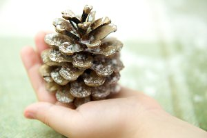 Pine cone in child's hand