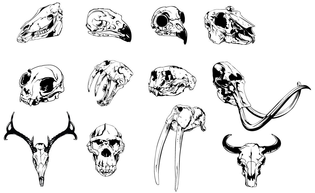 Animal Skulls Vector Pack ~ Illustrations ~ Creative Market