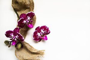 Orchids & Burlap on White Background