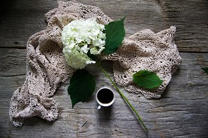Styled Hydrangea on Rustic Wood