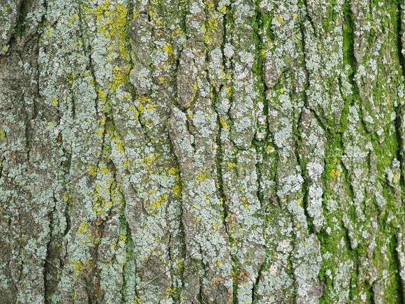 Rough Mossy Tree Bark Texture