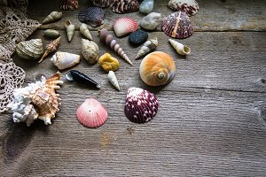 Seashells on Rustic Wood