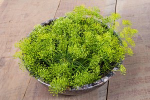 Fresh dill weed flowers