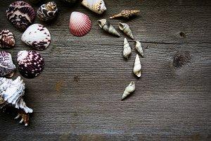 Styled Seashells on Rustic Wood