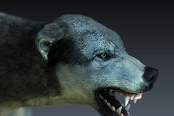 3D Animals: Game-Ready Studio - Wolf