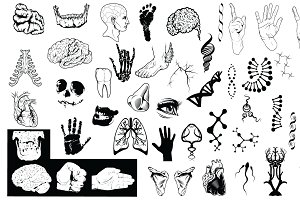 Anatomy Vector Pack 2