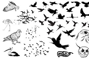 Flock of Birds Vector Pack 2